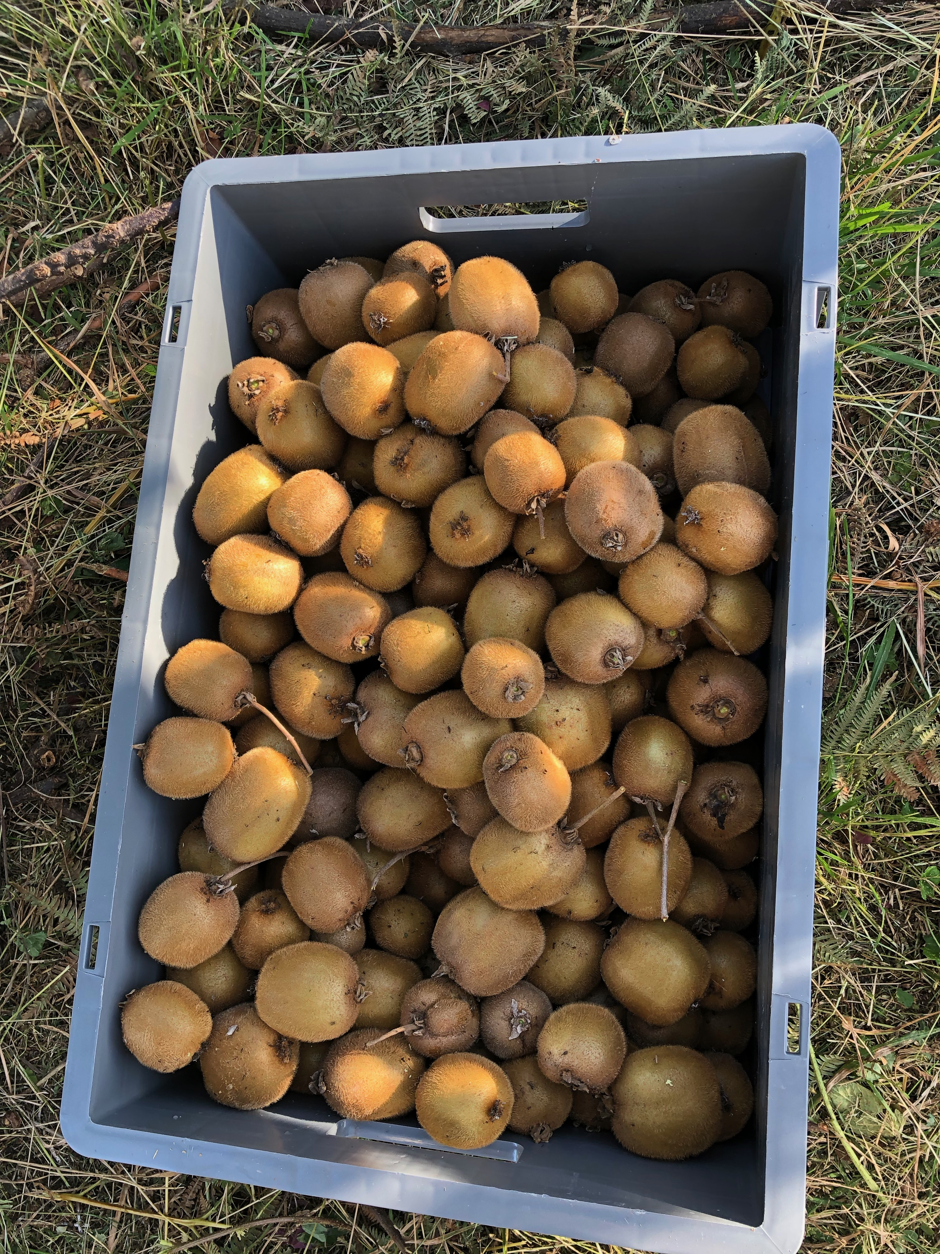 http://www.omu.edu.tr/sites/default/files/files/faculty_of_agricultures_kiwifruits_are_on_sale/omu_kivi_2018_2.jpeg